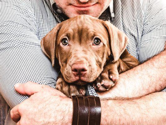 koerad vähendavad stressi