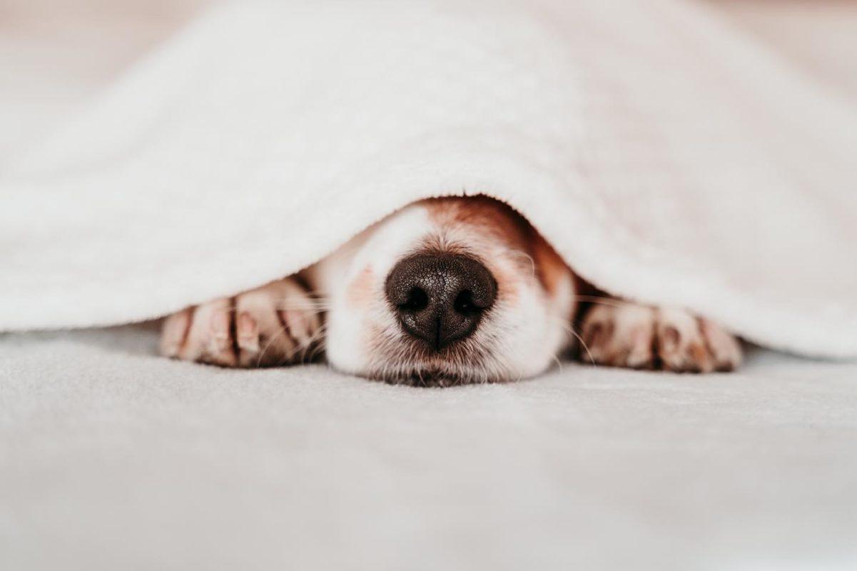 koera nina
