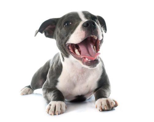 huvitavaid fakte koerte hammastest