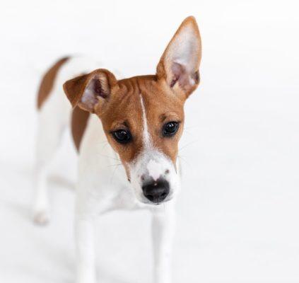 huvitavaid fakte koerte kõevadest