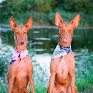 Koerte tooted: koerte kaelarätikud, bandanad
