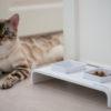 Söögialused kassidele, söögialused koertele